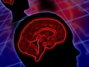 What Nutrients Increase Brain Function?