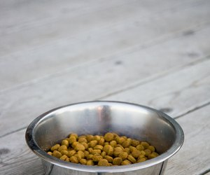 Can Dogs Eat Hominy