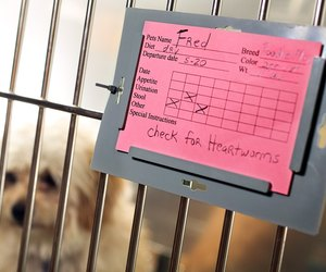 Can Dogs Pass Kennel Cough To Humans