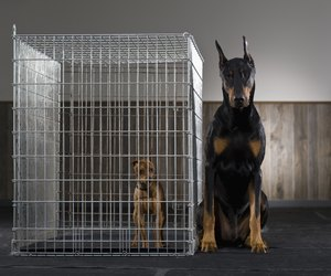 How To Stop Dog From Barking In Cage At Night