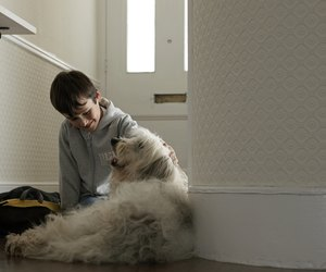 How To Stop Dogs From Chewing Their Blankets Dog Care