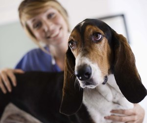 canine fetal development Ask a vet online for free chat live with veterinarians and other pet experts find answers to health, behavior and nutrition questions about dogs and cats.