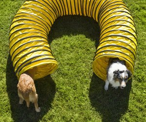 Obstacle Course Ideas For Pets