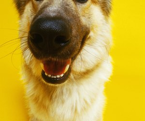 Ways To Clean Dogs Teeth At Home