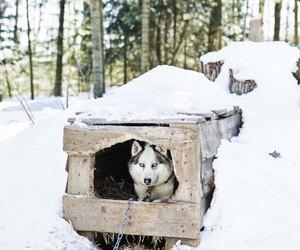 How To Insulate Igloo Dog House