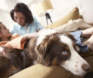 How To Deal With Nocturnal Enuresis In Dogs Dog Care