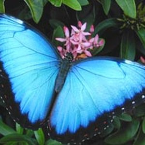 How to Find Coupons for the Butterfly House in St. Louis