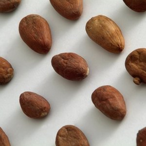 How to Invest in Cocoa