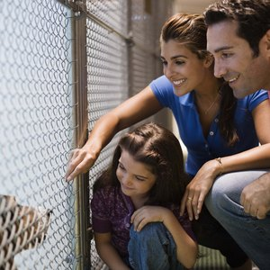 How to Build an Animal Shelter