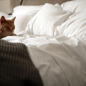 Does Renter's Insurance Cover Bedbug Infestation?
