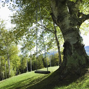 Does Renter's Insurance Cover a Fallen Tree?