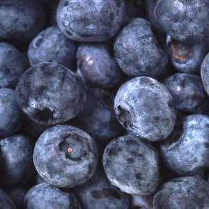 Fiber Content of Blueberries