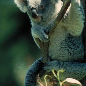 How to Trade Australian Stocks