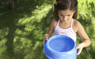 How to Prevent Bacteria in Pet Fountains