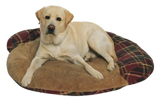 The Advantages of an Orthopedic Dog Bed
