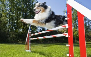 4H Dog Agility Class Lessons