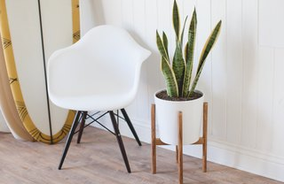 [Article Image] - Mid-Century Inspired Plant Stand