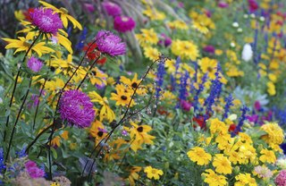 [Article Image] - Perennials That Bloom All Spring and Summer
