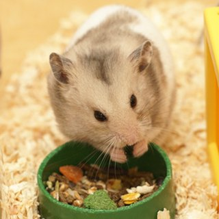 A List of Everything a Dwarf Hamster Can Eat