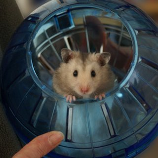 How to Keep a Hamster in Your Room