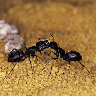 How to Get Rid of Flying Ants Outside