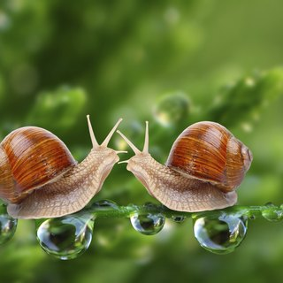 Why Snails Come Out of Their Shells
