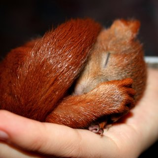 How to Care for Baby Squirrels