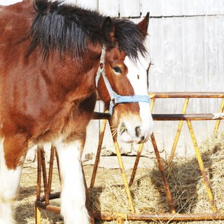 The Largest & Smallest Breeds of Horses