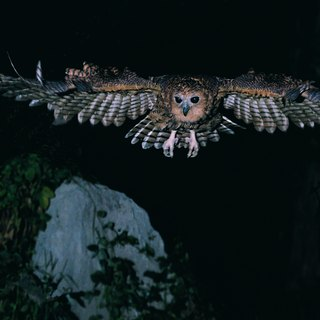 Why Do Nocturnal Animals Have Large Pupils?