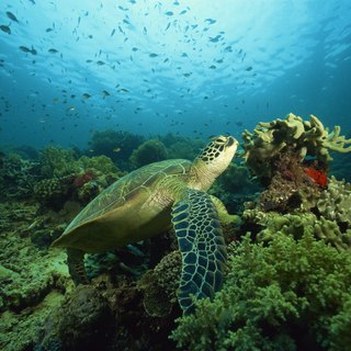 A List of Sea Turtles Endangered by Climate Change