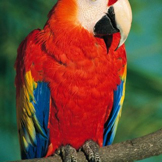 Parrots That Live in a Mexican Rain Forest