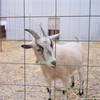 DIY Goat Shelter
