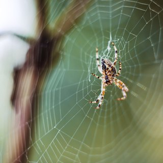 The Importance of Spiders to an Ecosystem