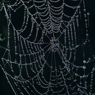 What Pests Leave a Fine Web Other Than Spiders?