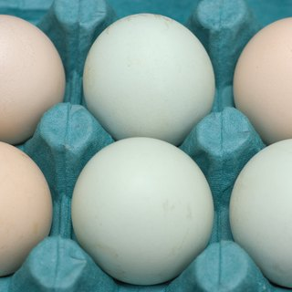 What Breeds of Chickens Lay Blue Eggs?