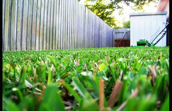 Make a business out of keeping lawns attractive and healthy.
