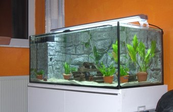 Aquariums can be found in many homes and professional offices.