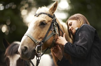 Equine surgeons perform complex diagnosis and treatment of horses.