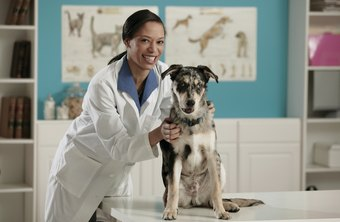 Veterinary practice managers see to administration so vets can concentrate on animal care.