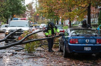 Arborists are often called to remove storm-damaged trees.