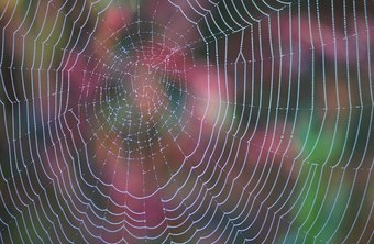 The fine details of this spiderweb could be lost when you resize.
