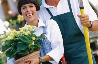 Family owned horticultural companies can service local and national markets.