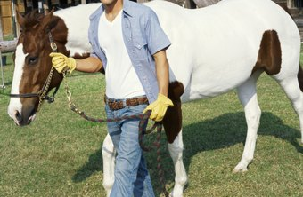 An equine facility full lease agreement should offer protections to both parties.