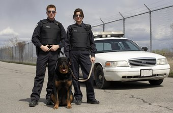 K-9 officers must have a close personal as well as working relationship with their service dogs.
