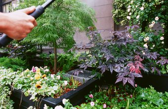 Nursery workers must keep plants properly watered.