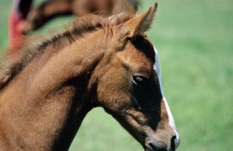 Horse-business owners should expect their assets to appreciate for tax purposes, according to the IRS.