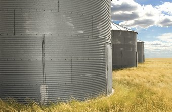 Silos stand apart in a vast sea of wheat, bastions alone in the culture.