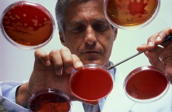 Bacteriologists work with a wide range of bacterial cultures.