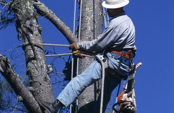 Tree trimmers use harnesses when working on tall foliage.