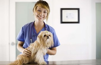 Vet receptionists work with the public and hands-on with animals.